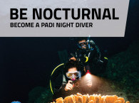 PADI Night Diver Specialty in Eilat