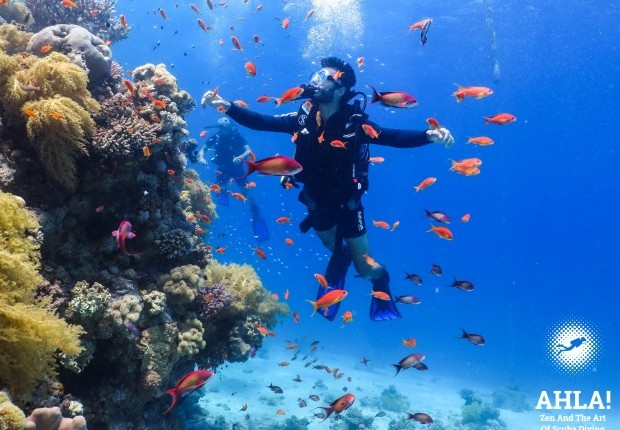 golden fish in red sea scuba diving in eilat