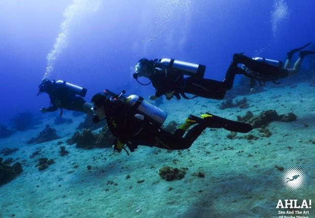 курсы дайвинга в израиле в эйлате на красном море