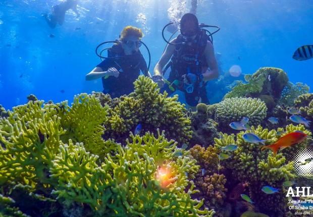 scuba diving in eilat israel