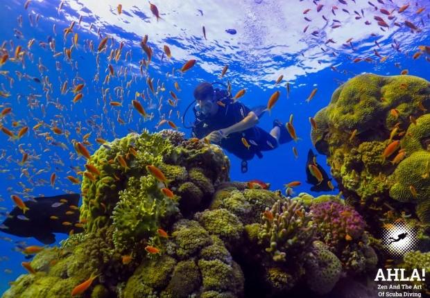 scuba diving in Eilat best diving center