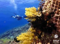 Plunge into the world of adventure with Ahla Dive Center