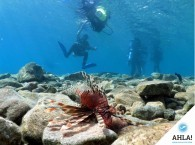 Ahla diving – professional hobby or extraordinary activity in Israel
