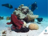 Diving for beginners in Eilat