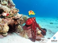 Notable events in diving history. (Part 1)