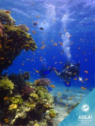 Master your skill of buoyancy
