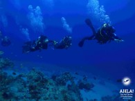 "Discover the incredible underwater world with multilevel diving from ""Ahla Diving Center"""