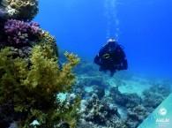 red sea diving_צלילה בים האדום_дайвинг на красном море эйлат