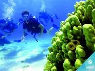 coral reef scuba diving_צלילת שונית אלמוגים_Коралловый риф подводное плавание