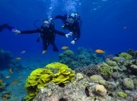 red sea diving sites