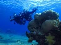 scuba diving courses red sea