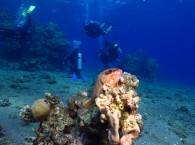 scuba diving holidays