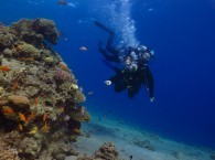 scuba diving introductory dive