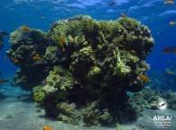 scuba diving holidays_скуба дайвинг каникулы_חגי הצלילה