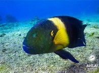 beautifull fish of red sea diving in eilat
