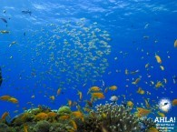 beautifull underwater world of red sea eilat diving
