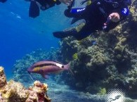 diving courses in Eilat Israel red octopus