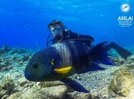 interesting fish in red sea scuba diving in eilat