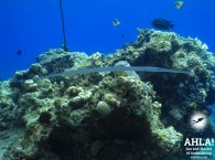 interesting fish in red sea scuba diving