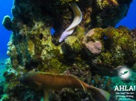moray eel in red sea eilat