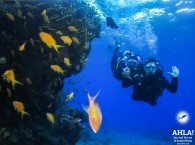 scuba diving in eilat red sea