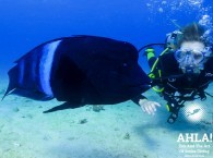 scuba diving in israel underwater world