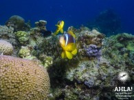 scuba diving eilat red sea