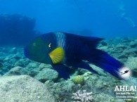 рыбы краного моря эйлат дайвинг fish in red sea eilat diving