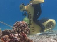 Совсем такая не маленькая Рыба-камень в Красном море