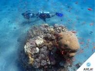Подводная фото и видео съемка в Эйлате