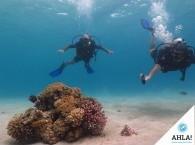 дайвинг курсы на Красном Море в Эйлате