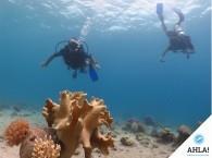 Красивые кораллы Красного моря в Эйлате