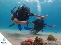 чудеса подводного мира Эйлата