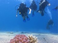 курсы дайвинга для начинающих_courses of diving for beginners