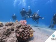 тренировка идеальной плавучести на дайвинг курсе_tranning perfect bouyancy in diving cousre
