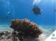 дайвинг для чайников_diving for beginners