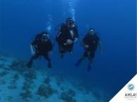 качественный дайвинг в Израиле_professional diving in Israel