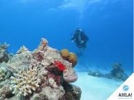 scuba diving lessons_курс обучения дайвингу