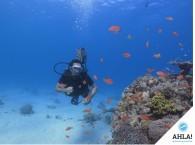 дайвинг лицензия_diving lisence   Используется в ссылках на фотографию, заголовках.