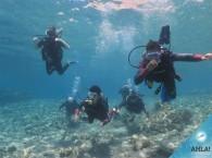 дайвинг курсы для начинающих в Эйлате_diving_courses_for_behinners_in_Eilat.jpg