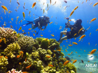 cheap diving holidays in eilat