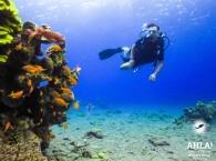 padi diving center in israel eilat