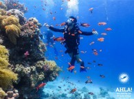 """diving site in Eilat """"Moses Rock"""""""