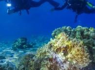 Diving site in Eilat Three Sisters