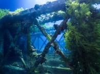 """diving site in Eilat """"Underwater Restaraunt"""""""