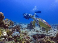 "diving site in Eilat ""University"""