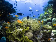 "diving site in Eilat ""Veronica"""